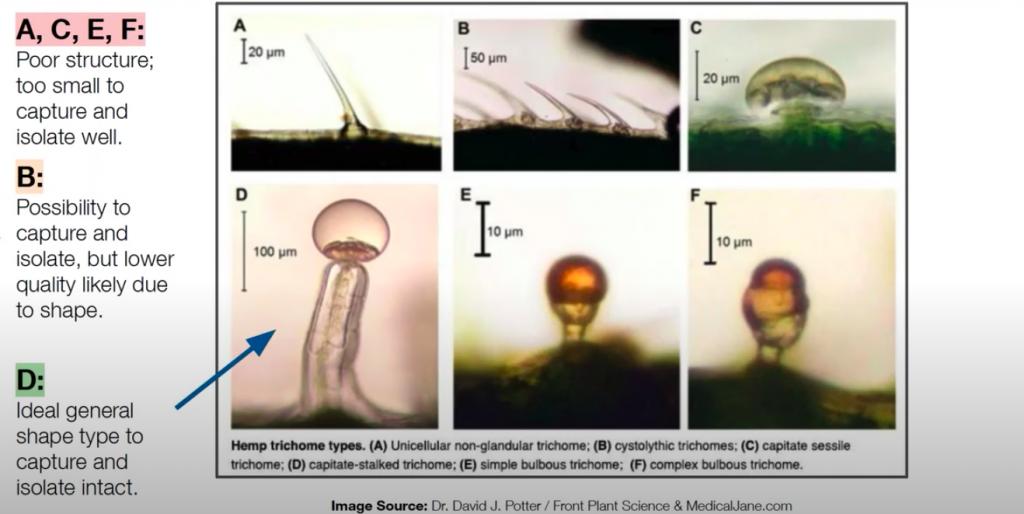 Vergleich verschiedener Trichomarten bzw Größen auf ihre Nutzbarkeit in Wasser-Hasch